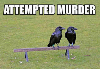 attempted-murder.png